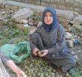 زنان روستایی - حقوق زنان روستایی