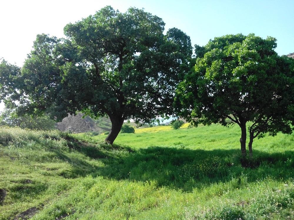 طبیعت اطراف روستای افرینه در نوروز سال 1395سه