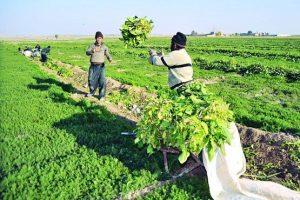 پرداخت قسطی حق بیمه اجتماعی روستاییان، عشایر و کشاورزان هرمزگانی