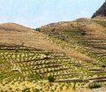 یک تجربه موفق در استان گلستان/ ایجاد بیش از 800 شغل در پروژه روستایی ترسیب کربن