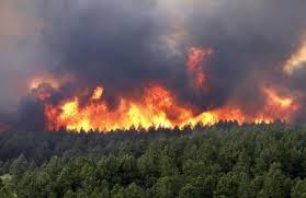 آتش سوزی در نکا