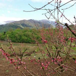 روستای گزشرقی
