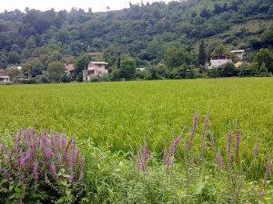 روستای آهودشت