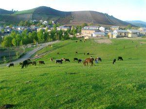روستای دوزین