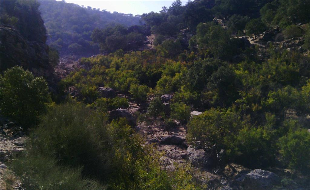 روستای دیل گچساران