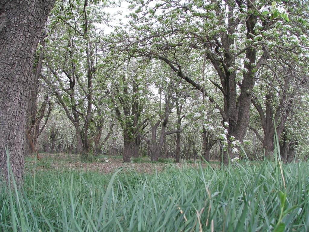 باغ سیب مهرشهر کرج