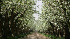 باغ سیب مهر شهر کرج