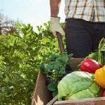 سبزیجات ارگانیک روستای چهل حصار