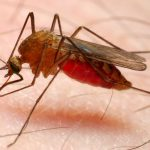 عملیات سمپاشی مالاریا در شهرستان چابهار