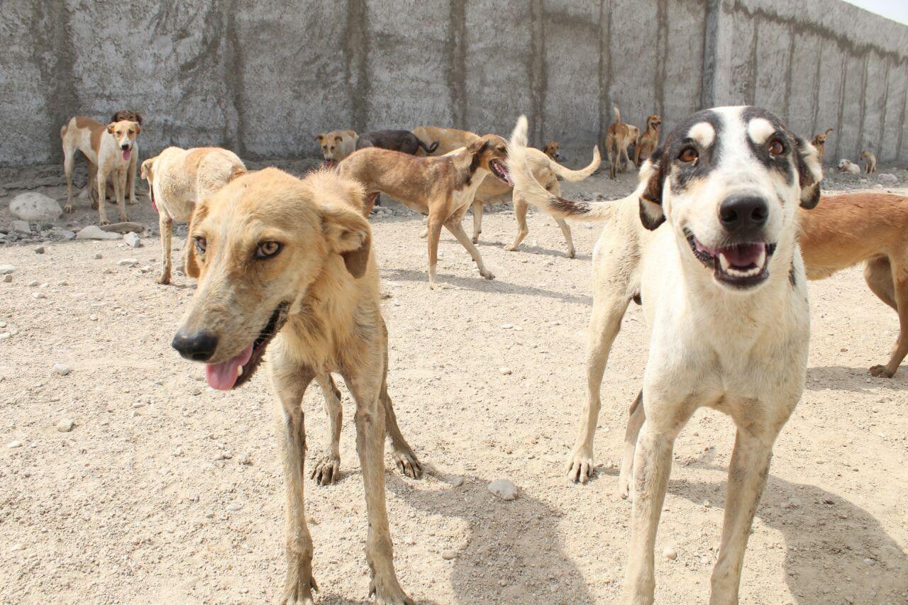راه حل موثر برای کنترل و کم کردن جمعیت سگهای ولگرد در ایران چیست؟