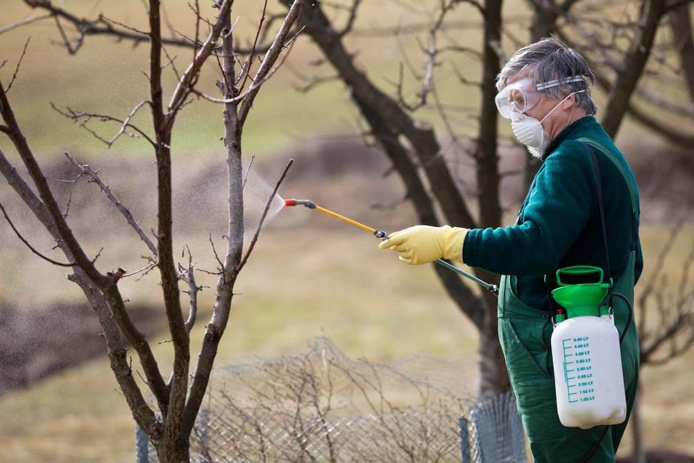 نکات آموزشی در سمپاشی زمستانه باغات